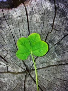 four leaf clover, luck, lucky charm